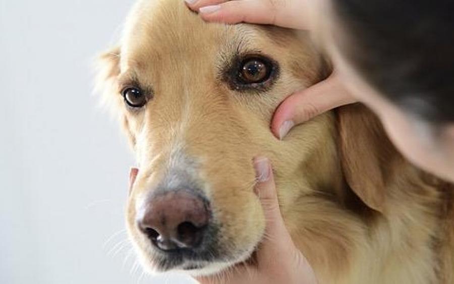 ee5ed6c2482c Σημάδια ότι πρέπει να πάτε τον σκύλο σας στον κτηνίατρο - InKefalonia