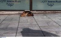 Νέος νόμος για τα κατοικίδια: Κακούργημα η εγκατάλειψη νεογέννητων, υποχρεωτική η στείρωση των ζώων συντροφιάς