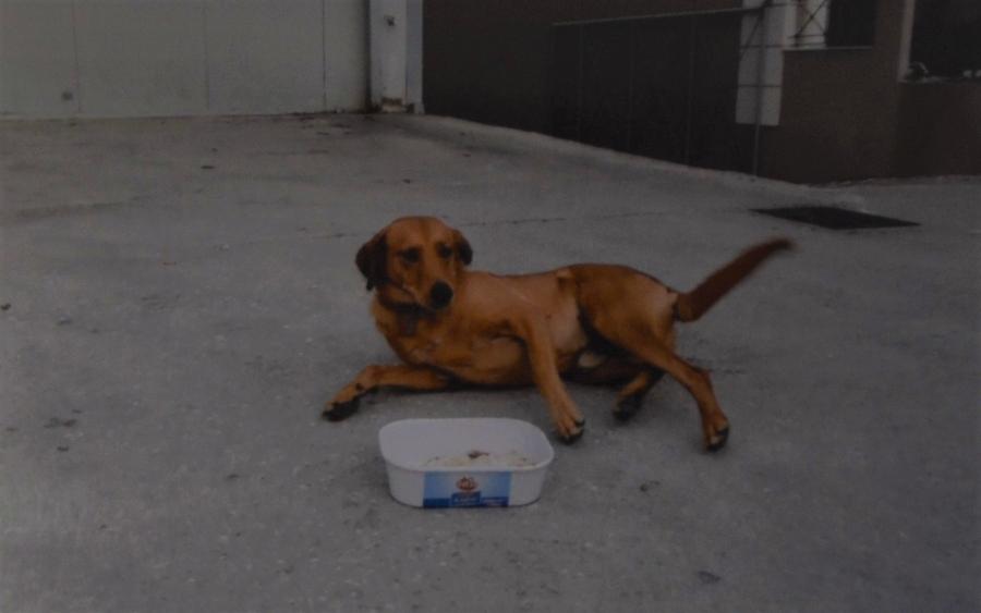58a3af8e8668 Τρία σκυλάκια αναζητούν σπίτι (εικόνες) - InKefalonia