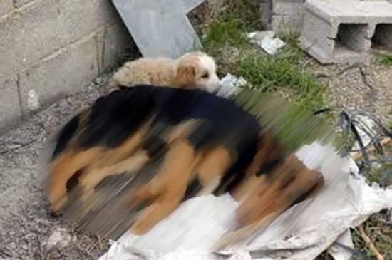O Σύλλογος Ζωόφιλων Ντόρις για τις δηλητηριάσεις σκυλιών στο Ληξούρι