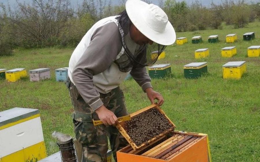 Αποτέλεσμα εικόνας για Οικονομική στήριξη της νομαδικής μελισσοκομίας΄΄ για το έτος 2017.
