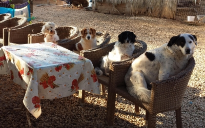 Help us get full-time staff for Doris ARK (Animal Rescue Kefalonia)