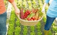 Ενημέρωση απο την Αγροδιατροφική Σύμπραξη Περιφέρειας Ιονίων Νήσων
