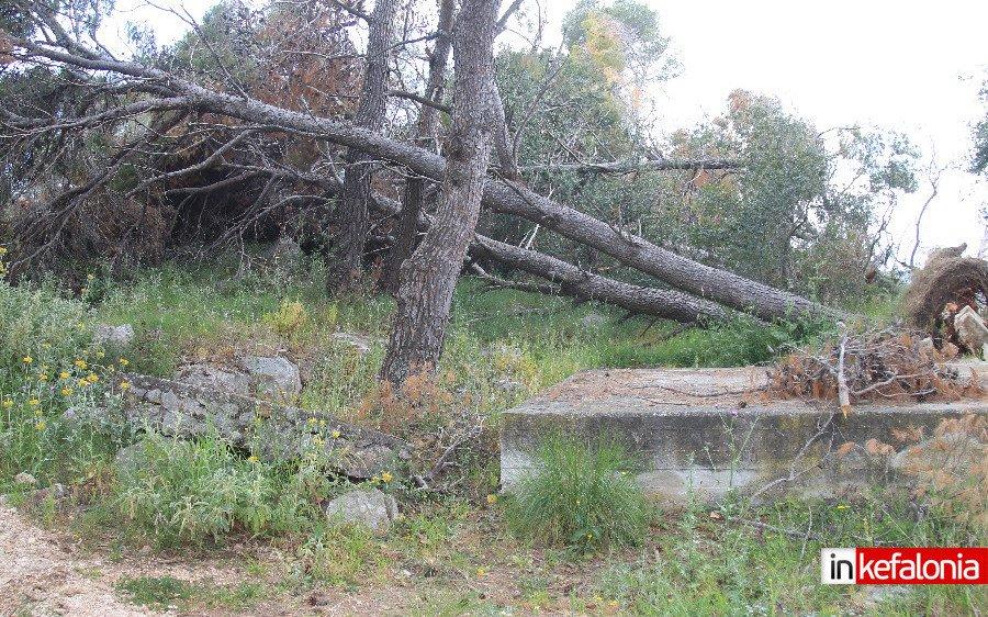 Εγκληματική αδιαφορία η παραμονή δεκάδων ξερών δέντρων στο Αργοστόλι - Ξυπνήστε επιτέλους !
