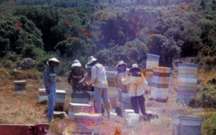 Μια μνήμη για τον σπουδαίο μελισσοκόμο Διονύση Γκιόλμα