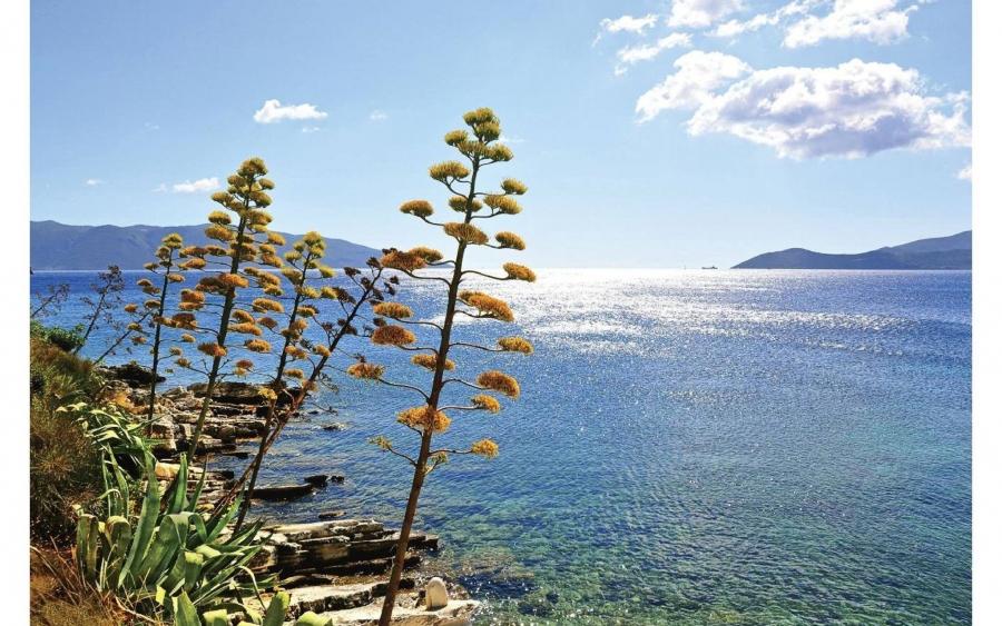 Εργόχειρα από το φυτό «Αθάνατος» στην Κεφαλονιά, τα μοναδικά στην Ελλάδα!